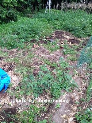 2014.6.15家庭菜園