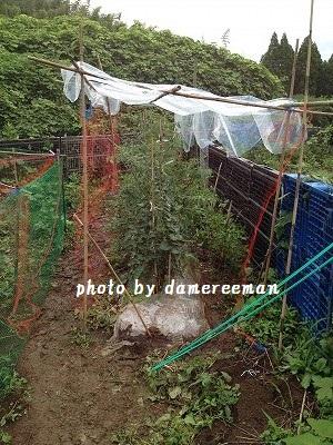 2014.6.22開墾地10