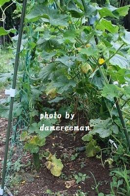 2014,7.5家庭菜園6