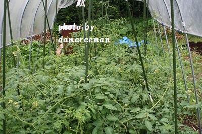 2014,7.5家庭菜園7