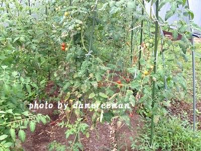 2014.7.24家庭菜園6