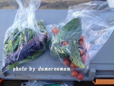 2014.7.24家庭菜園8
