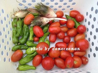 2014.7.25家庭菜園