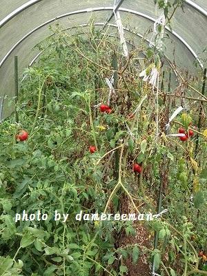 2014.8.16家庭菜園2