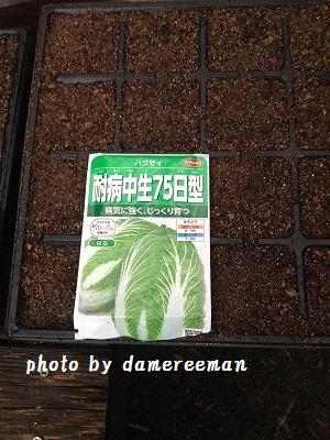 2014.8.20白菜
