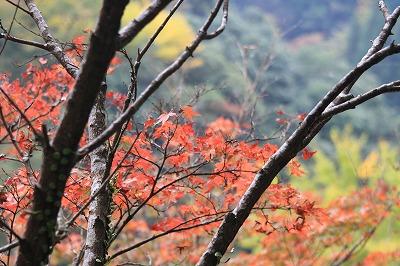 2014.11.8竜門の滝4