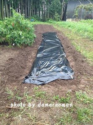 2014.9.7家庭菜園2