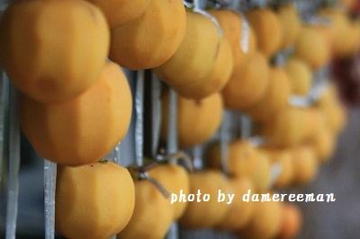 2014.11.16柿