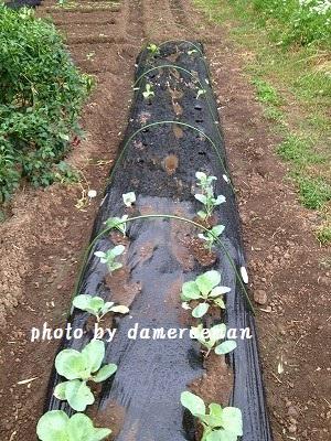 2014.9.20家庭菜園