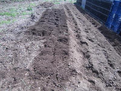 2014.3.22家庭菜園6