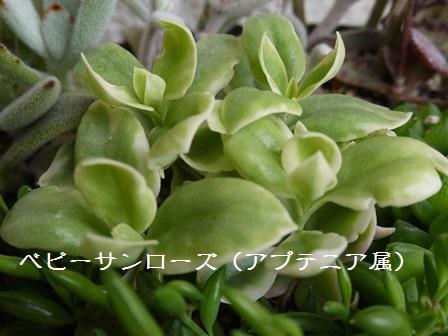 P1120112_1501.jpg