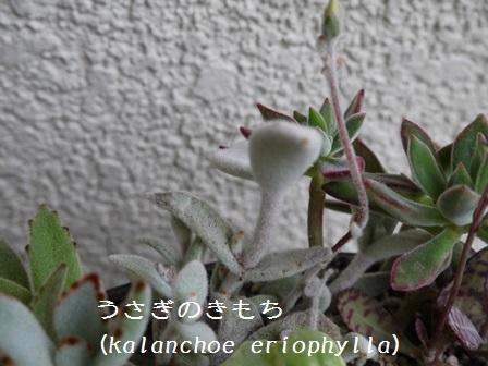 P1120113_1502.jpg