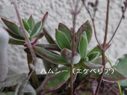 P1120114_1503.jpg