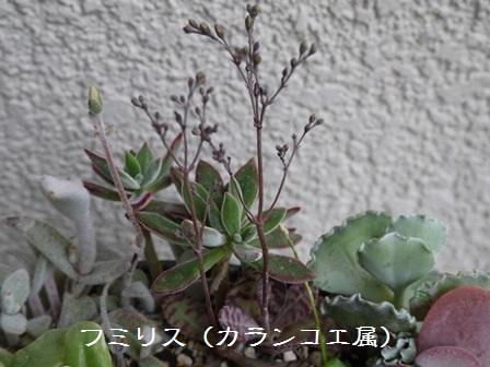 P1120115_1504.jpg