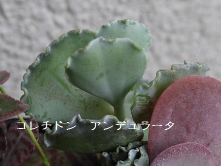 P1120116_1505.jpg