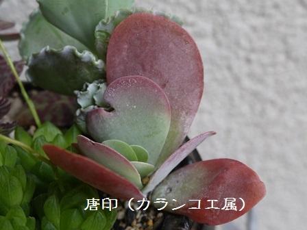 P1120117_1506.jpg