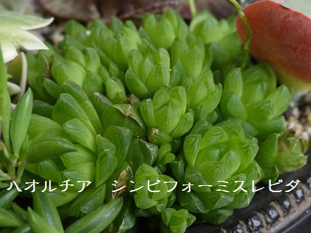 P1120118_1507.jpg