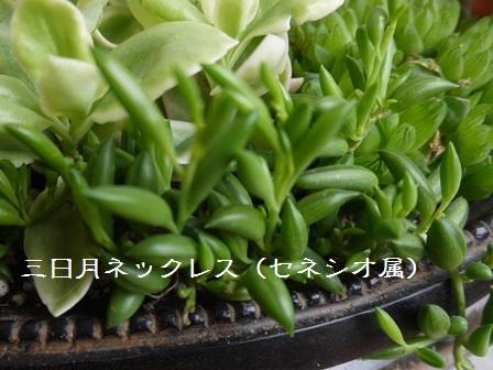 P1120119_1508.jpg