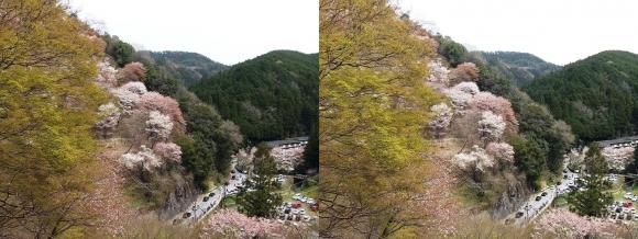 吉野 観光車道(平行法)