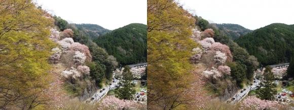 吉野 観光車道(交差法)