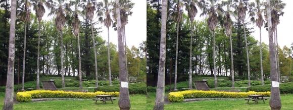 鶴見緑地公園内③(平行法)