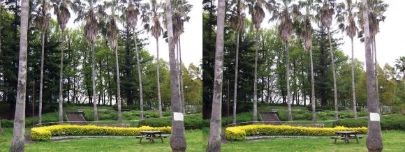 鶴見緑地公園内③(交差法)