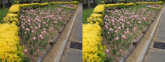 鶴見緑地公園の花㉚(平行法)