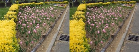 鶴見緑地公園の花㉚(交差法)