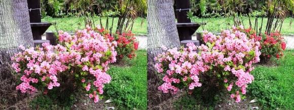 鶴見緑地公園の花㉙(平行法)