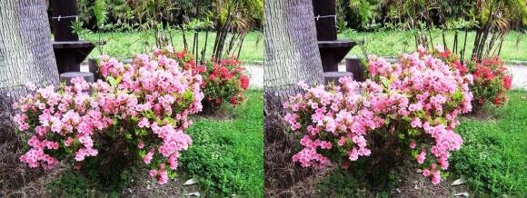 鶴見緑地公園の花㉙(交差法)