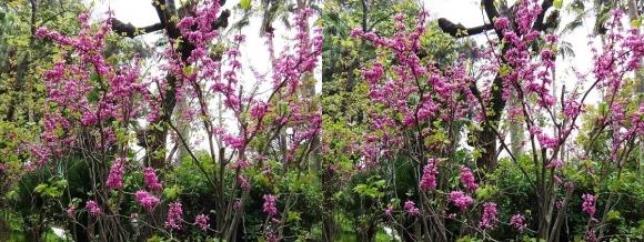鶴見緑地公園の花㉘(平行法)