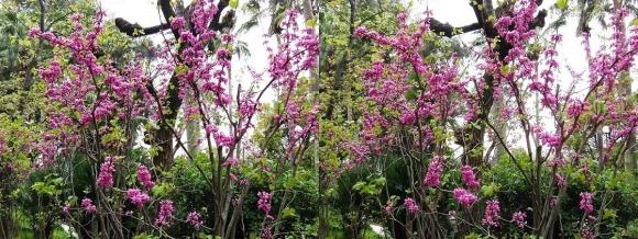 鶴見緑地公園の花㉘(交差法)