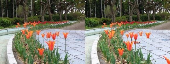 鶴見緑地公園の花㉗(平行法)