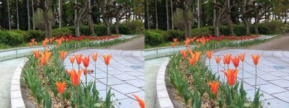 鶴見緑地公園の花㉗(交差法)