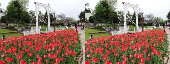 鶴見緑地公園の花㉖(平行法)