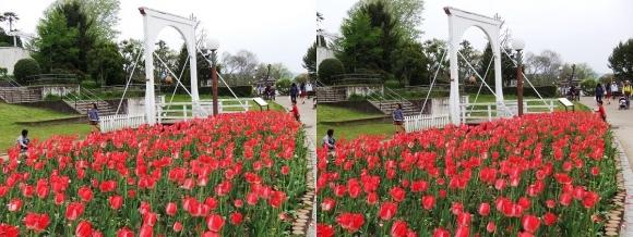 鶴見緑地公園の花㉖(交差法)