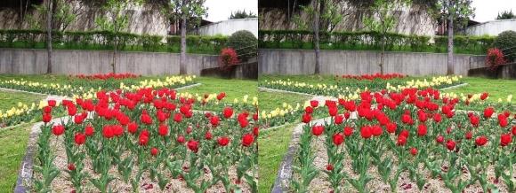鶴見緑地公園の花㉕(平行法)
