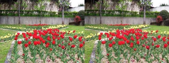 鶴見緑地公園の花㉕(交差法)