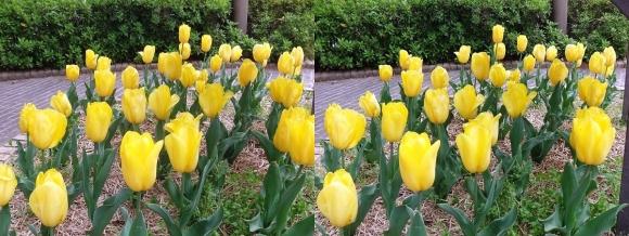 鶴見緑地公園の花㉔(平行法)