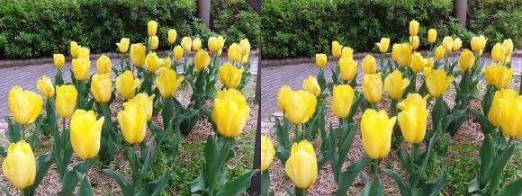 鶴見緑地公園の花㉔(交差法)