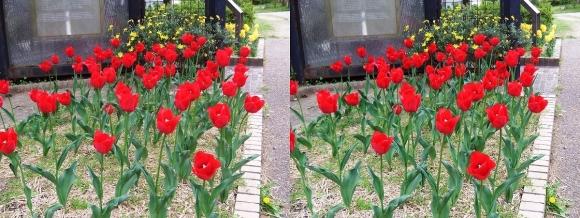 鶴見緑地公園の花㉓(平行法)