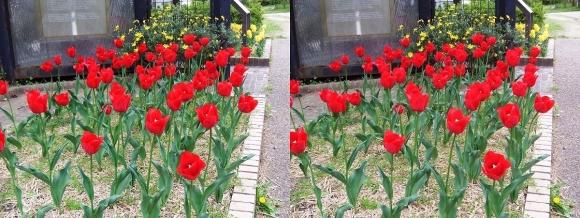 鶴見緑地公園の花㉓(交差法)