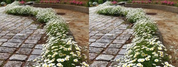 鶴見緑地公園の花㉑(平行法)