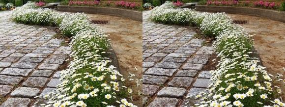 鶴見緑地公園の花㉑(交差法)