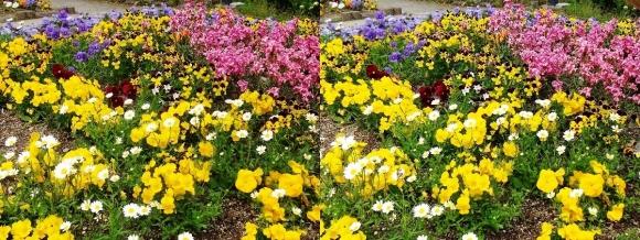 鶴見緑地公園の花⑳(平行法)