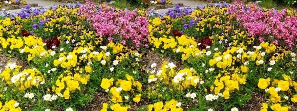 鶴見緑地公園の花⑳(交差法)