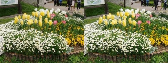 鶴見緑地公園の花⑲(平行法)