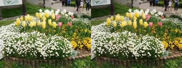 鶴見緑地公園の花⑲(交差法)