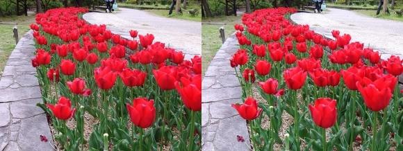 鶴見緑地公園の花⑱(平行法)