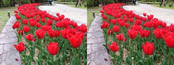 鶴見緑地公園の花⑱(交差法)